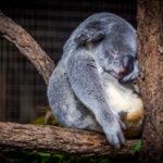 Blog over rust in je hoofd geillustreerd door een aap